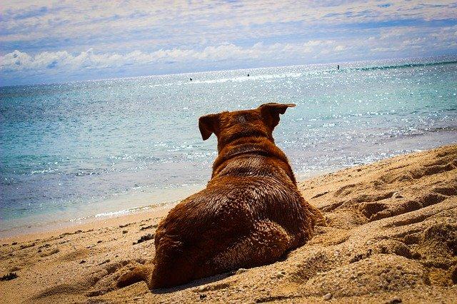 In vacanza con un animale: documenti necessari
