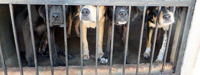 Processo a Bari per l'uomo che ha ucciso e rinchiuso centinaia di cani