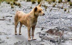Logran fotografiar al perro mas raro del mundo
