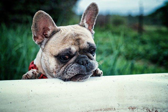 Cani non vogliono fare il bagno ecco il perch dogalize - Bagno cane dopo antipulci ...