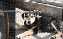 Appello per adozione: tre bellissimi cuccioli cercano casa