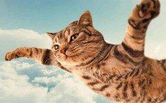 El gato volador: La sindrome del gato volador en los felinos