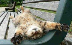 Gatos locos: ¿por qué mi gato actúa así?