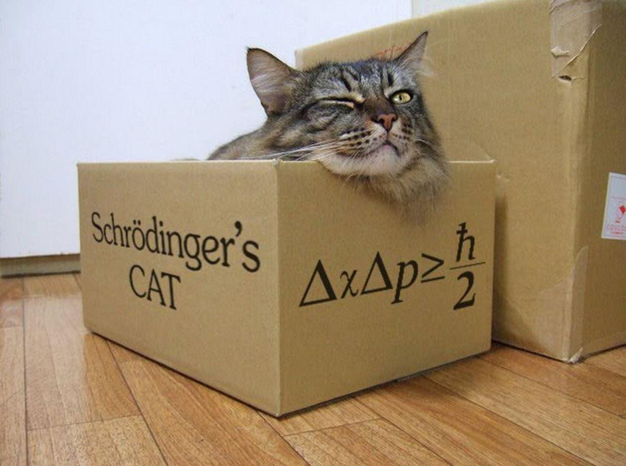 Il gatto di Schrödinger: romanzo dello scrittore Philippe Forest