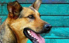 Le malattie respiratorie del cane: quali sono?