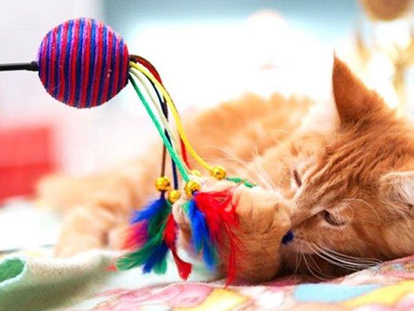 Juegos de gatos: los mejores juguetes para gatos