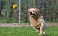 Giochi per cani a Bologna: i parchi e le aree verdi