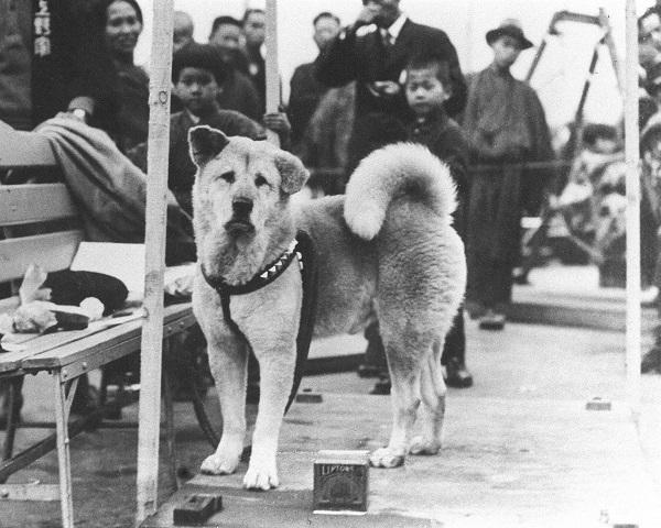 Historia de Perro: cuando nuestro amigo es el gran protagonista