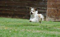 Giochi per cani adulti: il nascondino e la sorpresa nascosta