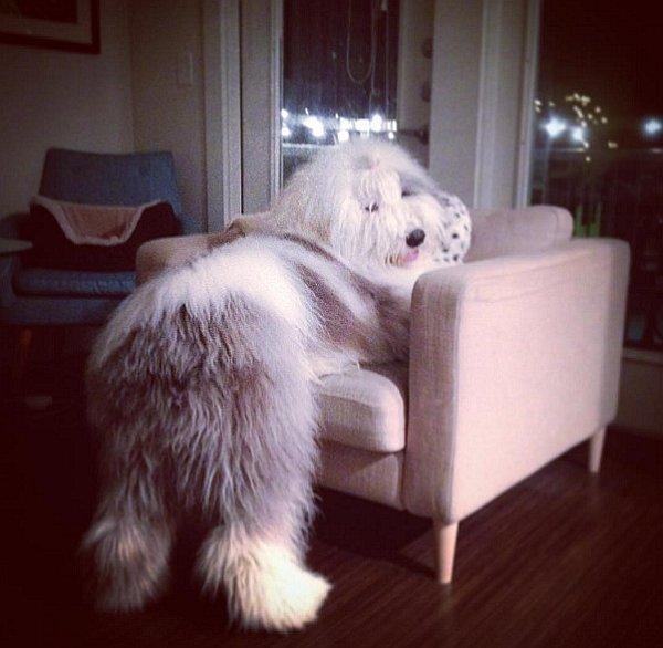 Rocco, el perro torpe y adorable que conquista las redes sociales