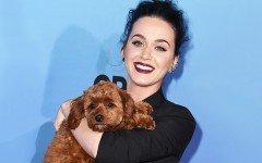 Katy Perry e il suo adorato cagnolino Butters