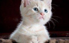 Alimentazione dei cuccioli di gatto: le regole da seguire