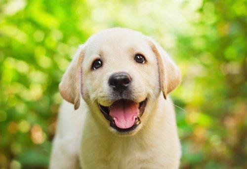 Perro Scottex: ¿te recuerdas el famoso perrito?