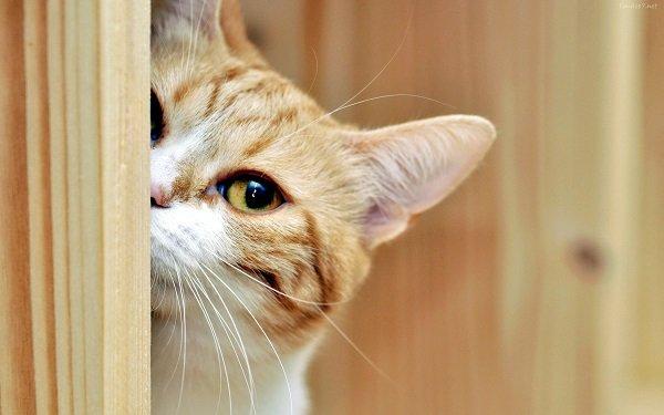 La curiosidad mato al gato: un popular refrán
