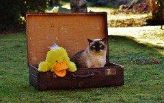 In vacanza con il gatto: tutto quello che c'è da sapere