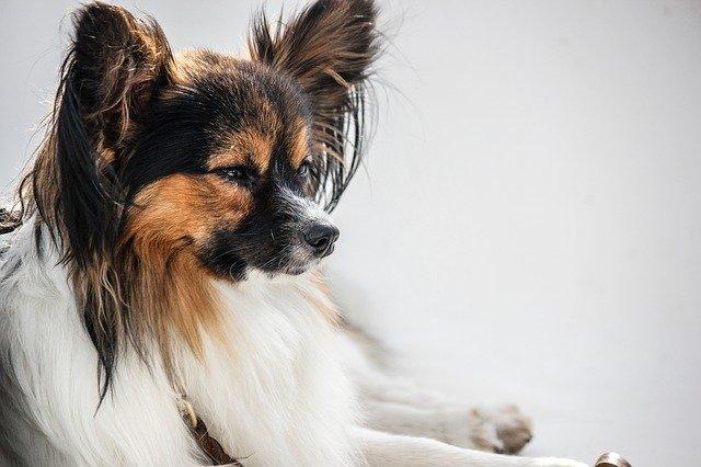 Cura della sordità del cane: diagnosi accurata e terapia mirata