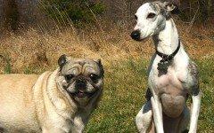 I cereali nella dieta del cane: dosi e somministrazione