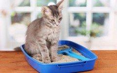Areneros para gatos: un elemento importante para la casa arenero para gato