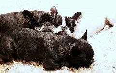 Perchè il cane russa? Quali patologie possono nascondersi?