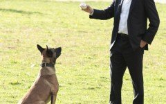 La razza del cane di Person of Interest: il pastore belga Malinois
