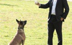 La razza del cane di Person of Interest: il pastore belga Malinois