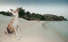Animali in vacanza: dove sono ammessi cani e gatti