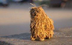 Conosciamo Soshee, il nuovo cane robot per i social media