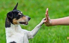 Como educar a mi perro: Trucos y consejos