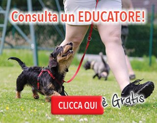 banner_educatore