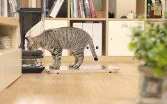 Dispensador comida gato: lo que debes saber sobre dispensadores