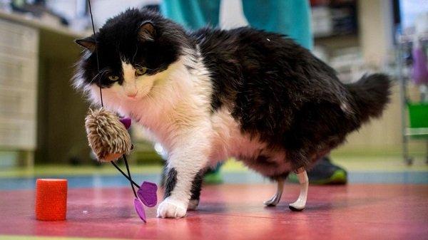 El gato de tres patas