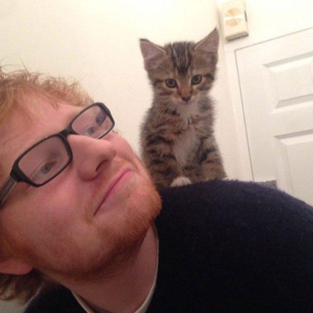 Ed sheeran e il suo gatto graham amore unico dogalize for Suo e suo bagno