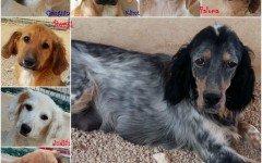 Appello per adozione: Mamma Lara e i cuccioli cercano casa