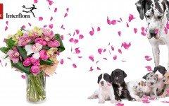 Festa della mamma: i consigli di Dogalize per il regalo perfetto