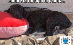 Appello per adozione: Mamma Maila cerca ancora casa