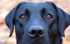 Enfermedades oculares de los perros: pon atención a sus ojos