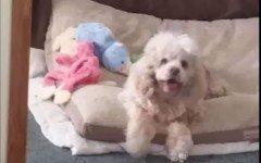 La storia di Kimberley e Sadie che è apparsa dopo l'eutanasia