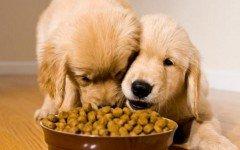 comida gratis para perro comida gratis para tu perro