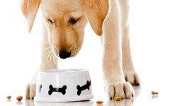 Contenedor comida perro: ¿Cómo hacer un contenedor?