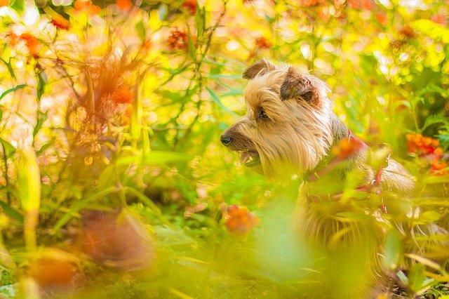 Cura del cane con le erbe: rimedi naturali efficaci