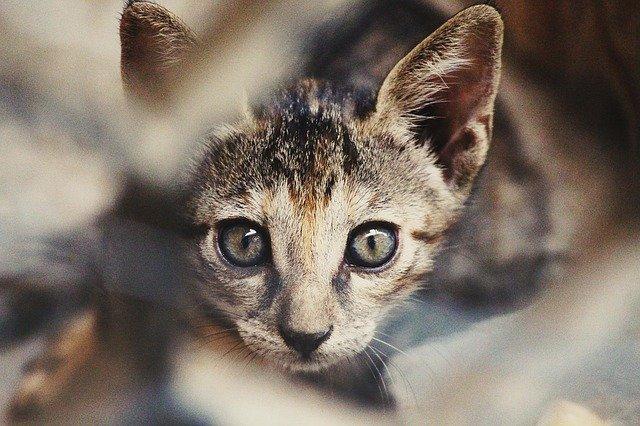 Alimentazione gatto a 2 mesi, tutto ciò che serve sapere