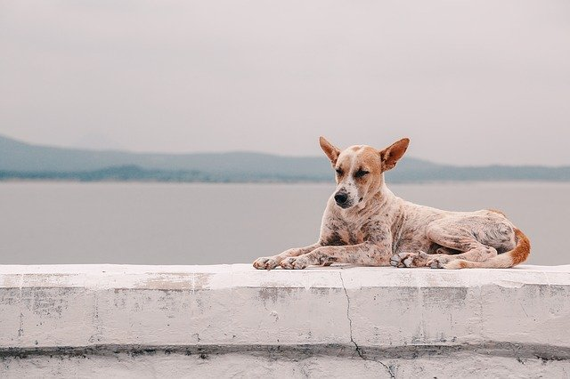 Animali in vacanza: visitate la città di Lamezia