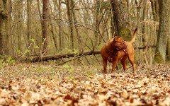 Cosa accade se il cane mangia funghi velenosi?