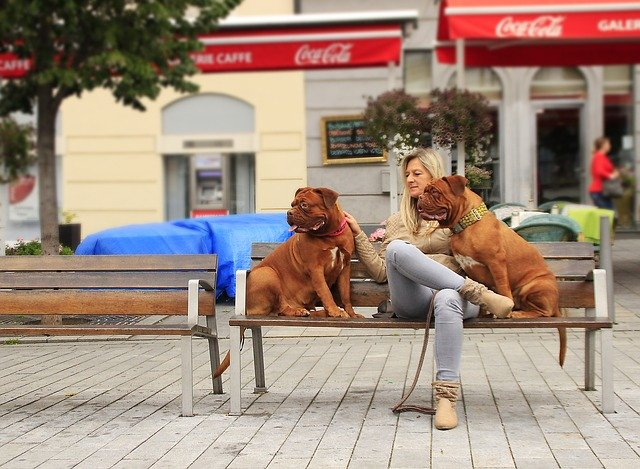 Torino: via Po diventa la prima strada pet friendly