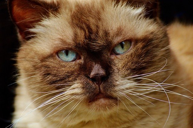 Megacolon nel gatto: cause, sintomi, diagnosi e cura