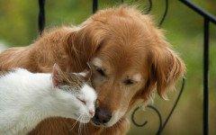 Tumori neuroendocrini in cane e gatto: i tipi principali