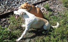 Cane rimane vicino all'amico ferito in attesa dei soccorsi
