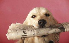 Las más interesantes noticias de perros