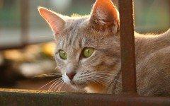 Alimentazione del gatto anziano: come deve essere?