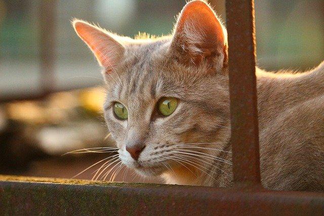 alimentazione del gatto anziano come deve essere dogalize. Black Bedroom Furniture Sets. Home Design Ideas